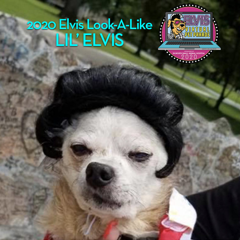 Winners Chosen for the 2020 Dilworth Virtual Elvis Pet Parade