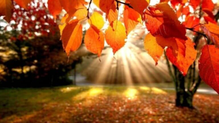 First day of Fall forecast for North Mississippi